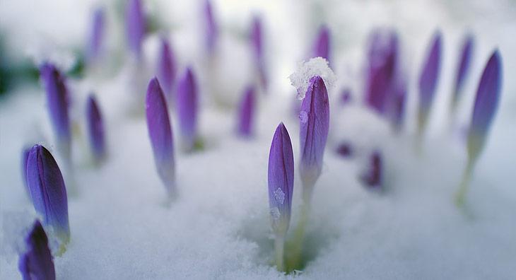 Se purifier au printemps