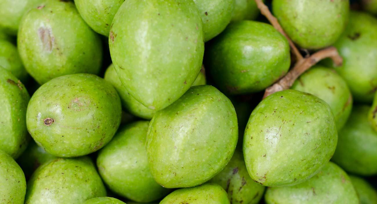 Le bibhitaki – le « fruit d'un arbre prodigieux »