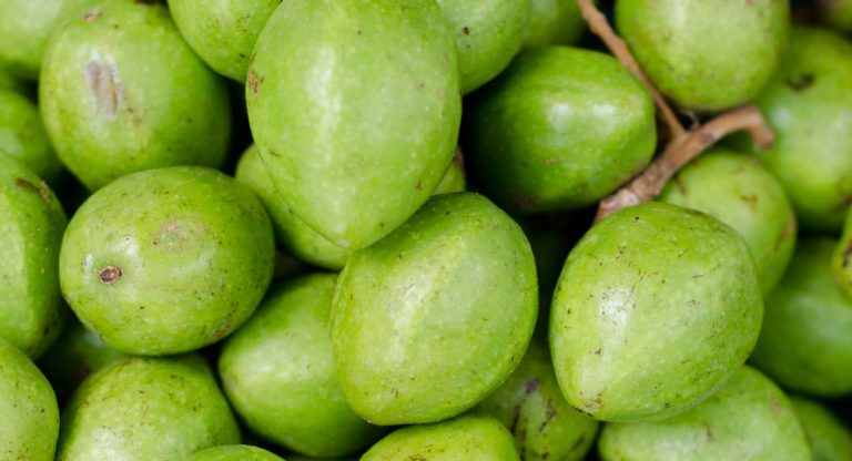 bibhitaki-eine-wunderbaumfrucht